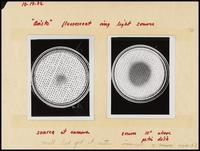 UC Berkeley Virus Lab: Phil Spielman lab journal, 1968-1973