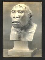 Bust of Pithecanthropus